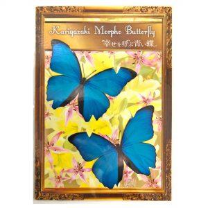 ブルーモルフォ蝶 マグネット付き